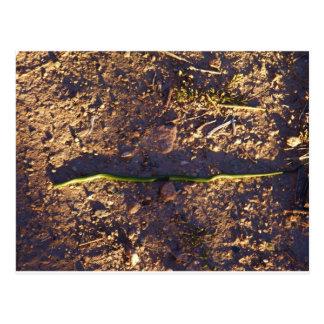 Serpiente verde en la tierra postales