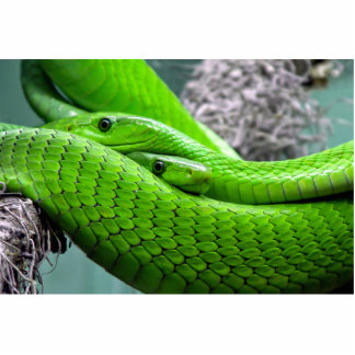 Serpiente verde fotoescultura vertical