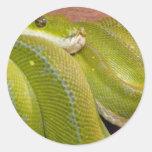 serpiente verde etiquetas redondas