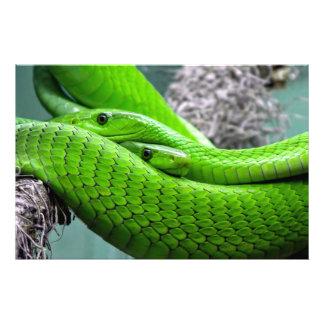 Serpiente verde arte con fotos