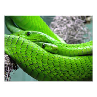 Serpiente verde impresion fotografica