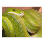 serpiente verde invitaciones personalizada