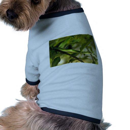Serpiente verde lisa camisa de mascota