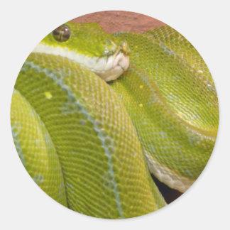 serpiente verde etiquetas