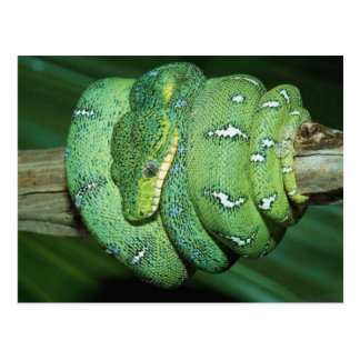 Serpiente verde postales