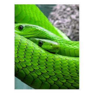 Serpiente verde tarjeta postal