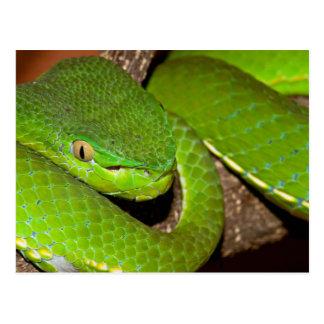 Serpiente verde venenosa tarjetas postales