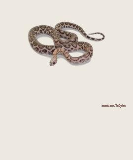 Serpientes 41 camisetas