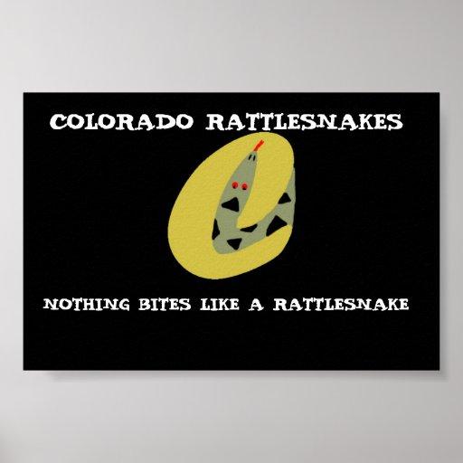 Serpientes de cascabel de Colorado Póster