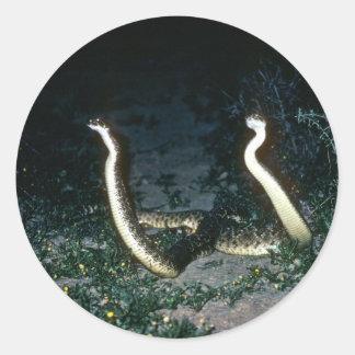 Serpientes de cascabel de Tejas Diamondback Pegatina Redonda