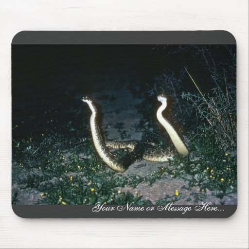 Serpientes de cascabel de Tejas Diamondback Alfombrilla De Ratones
