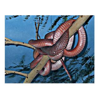 Serpientes venenosas en espiral rojo marrón postales