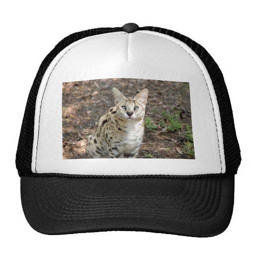 serval 004 gorras de camionero