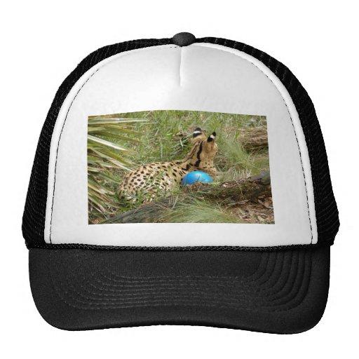 serval 008 gorras de camionero