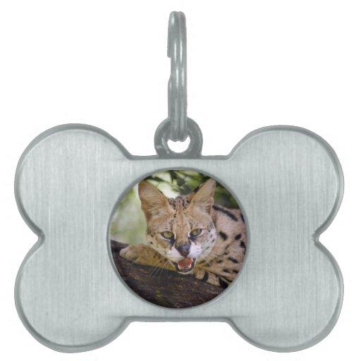 serval 013 placas de mascota