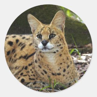 serval 015 classic round sticker