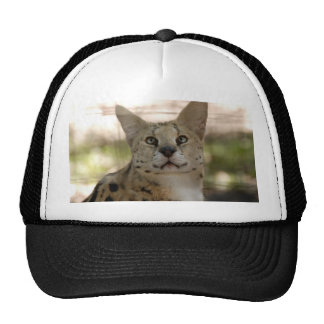 serval 017 trucker hat