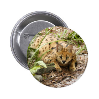 serval 019 pin