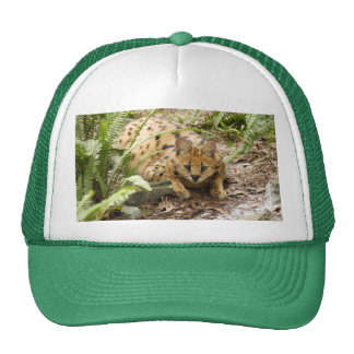 serval 019 trucker hat