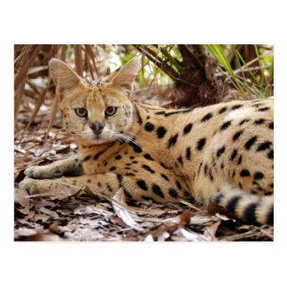 serval 025 tarjetas postales
