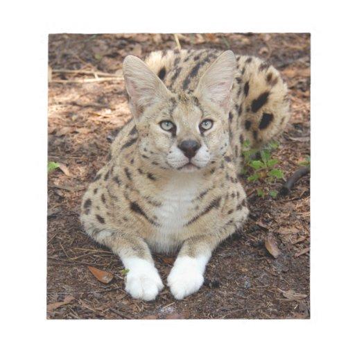 serval 028 bloc de notas