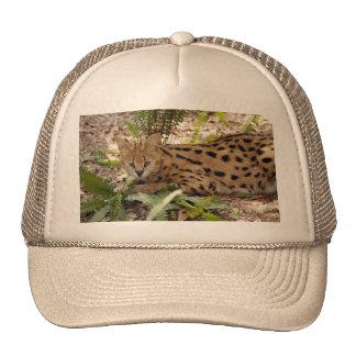 serval 029 trucker hat