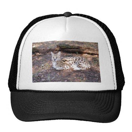 serval 042 gorras de camionero
