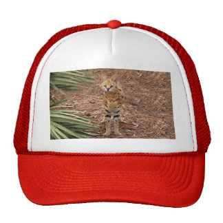 serval 046 trucker hat