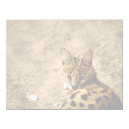 Serval cat card