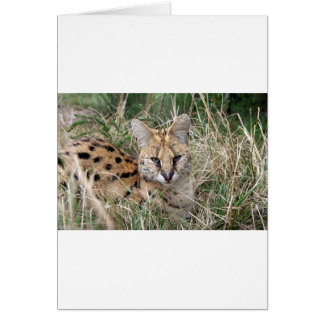 Serval cat relaxing in grass card