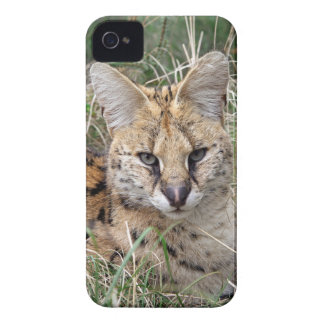 Serval cat relaxing in grass Case-Mate iPhone 4 cases