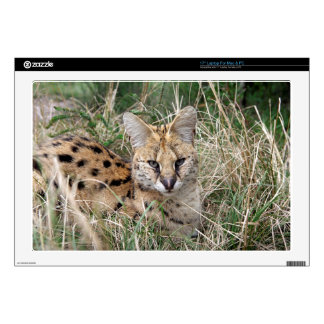 "Serval cat relaxing in grass decals for 17"" laptops"