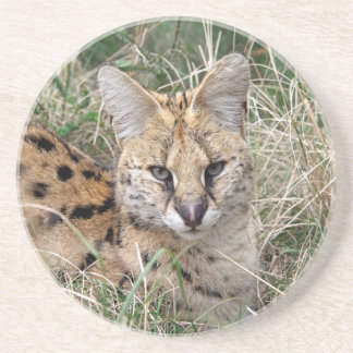 Serval cat relaxing in grass drink coaster