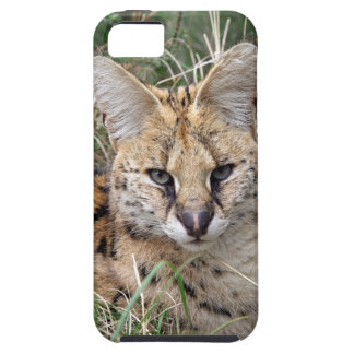 Serval cat relaxing in grass iPhone SE/5/5s case