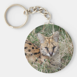 Serval cat relaxing in grass keychain