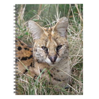 Serval cat relaxing in grass notebook