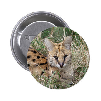Serval cat relaxing in grass pinback button