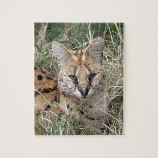 Serval cat relaxing in grass puzzle