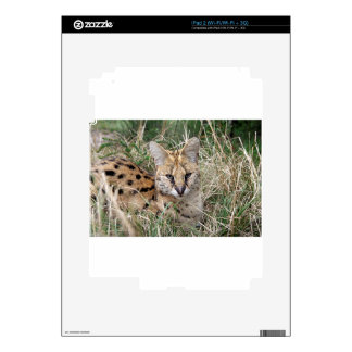 Serval cat relaxing in grass skins for iPad 2