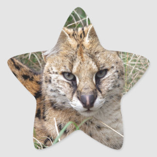 Serval cat relaxing in grass star sticker