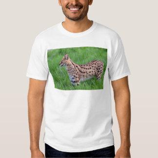 Serval en la hierba playera