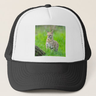 Serval in the grass trucker hat