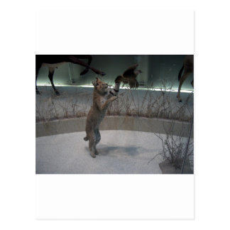 Serval intercepting a bird in mid-flight postcard