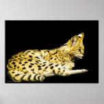 Serval Print