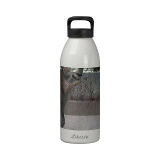 Serval que intercepta un pájaro en mediados de-vue botellas de agua reutilizables