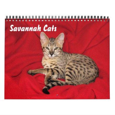 Serval Savannah Cat Calendar | Zazzle com