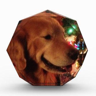 Service Dog Jonah & Christmas Tree Lights Acrylic Award