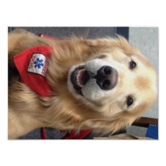 Service Dog Jonah  Smiles at the Dentist Poster