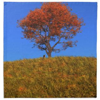 Servilleta clara del día del otoño