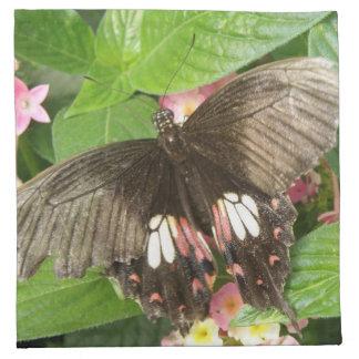 Servilletas de la macro de la mariposa de Swallowt